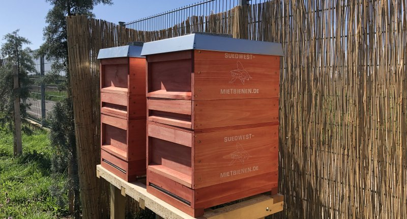 Bienen für Heidelberg