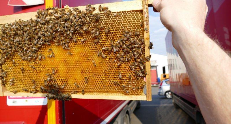 Schwarmkontrolle Bienen