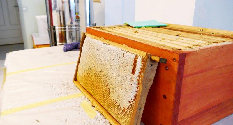 Honig Waben werden vorbereitet
